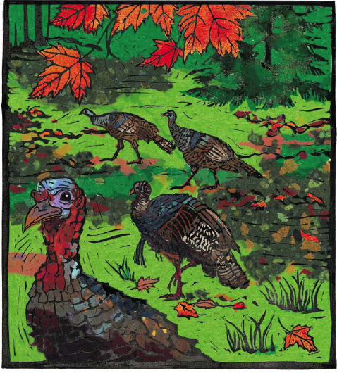 Gobble, Gobble at Maine Audubon